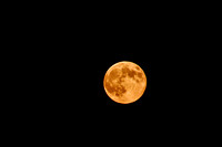 Super Moon 2014 Print Photograph For Sale Purchase