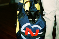 Packing for vacation and look who we found in one of the bags -- all ready to make the trip with us?  Jack! (September, 2005)© Carolyn S. Murray 2005