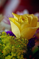 Yellow Rose Print Photograph For Sale Purchase Buy