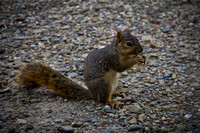 Squirrel Print Photograph Buy For Sale