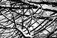 Snow Branches Tree Winter